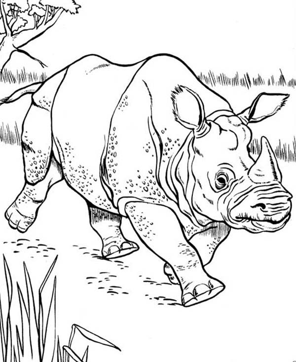 rhino coloring page - marvel rhino coloring pages sketch templates