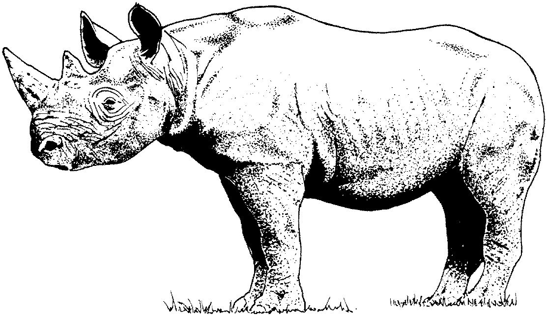 photograph relating to Rhino Printable named 28 Rhino Coloring Web site Quantity Totally free COLORING Webpages - Component 2