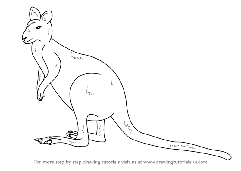 rose coloring pages for adults - how to draw an agile wallaby