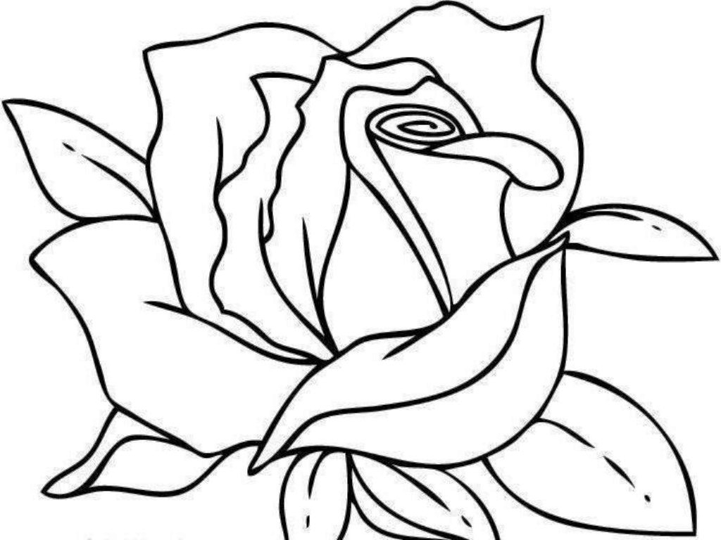 rose coloring pages printable - coloring pages