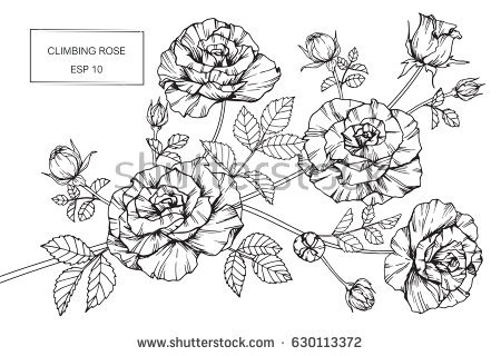 rose coloring pages - climbing rose flowers drawing sketch lineart src=O8ZBzlofG2oeqZ5NsfKCGA 1 57