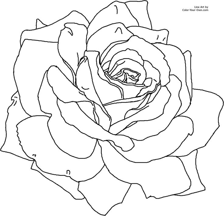 rose flower coloring pages - flower coloring pages