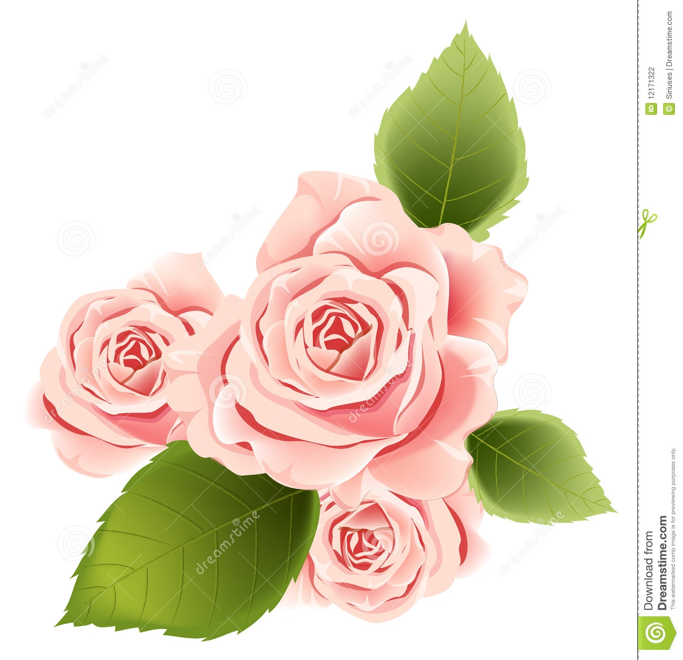 rose flower coloring pages - stock photography pink flower image