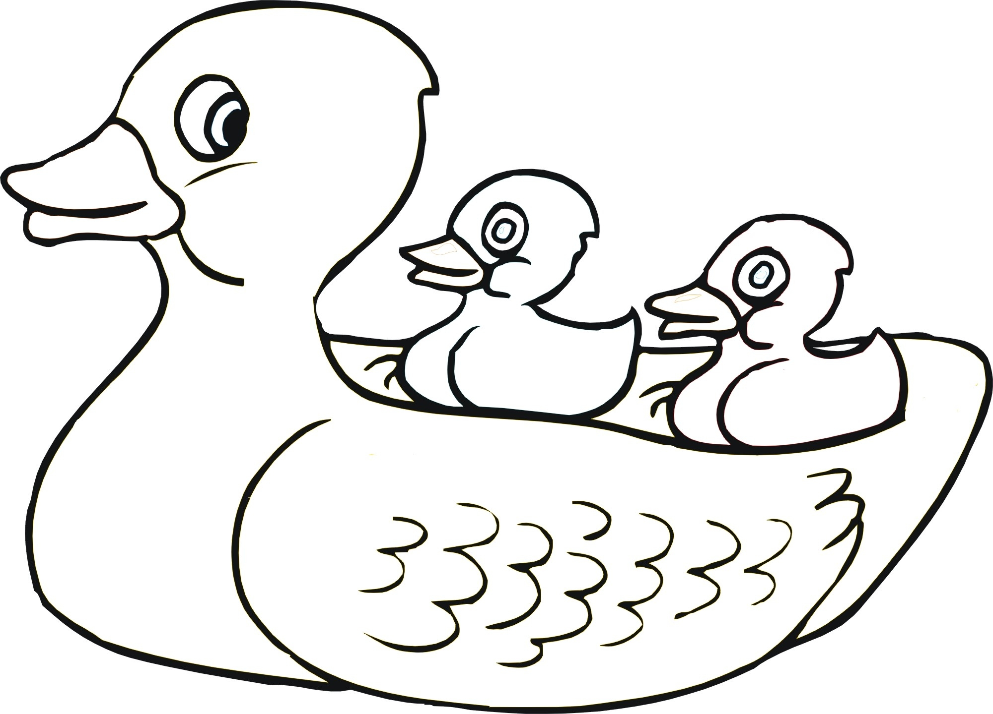 rubber duck coloring page - gallery for rubber duck coloring page