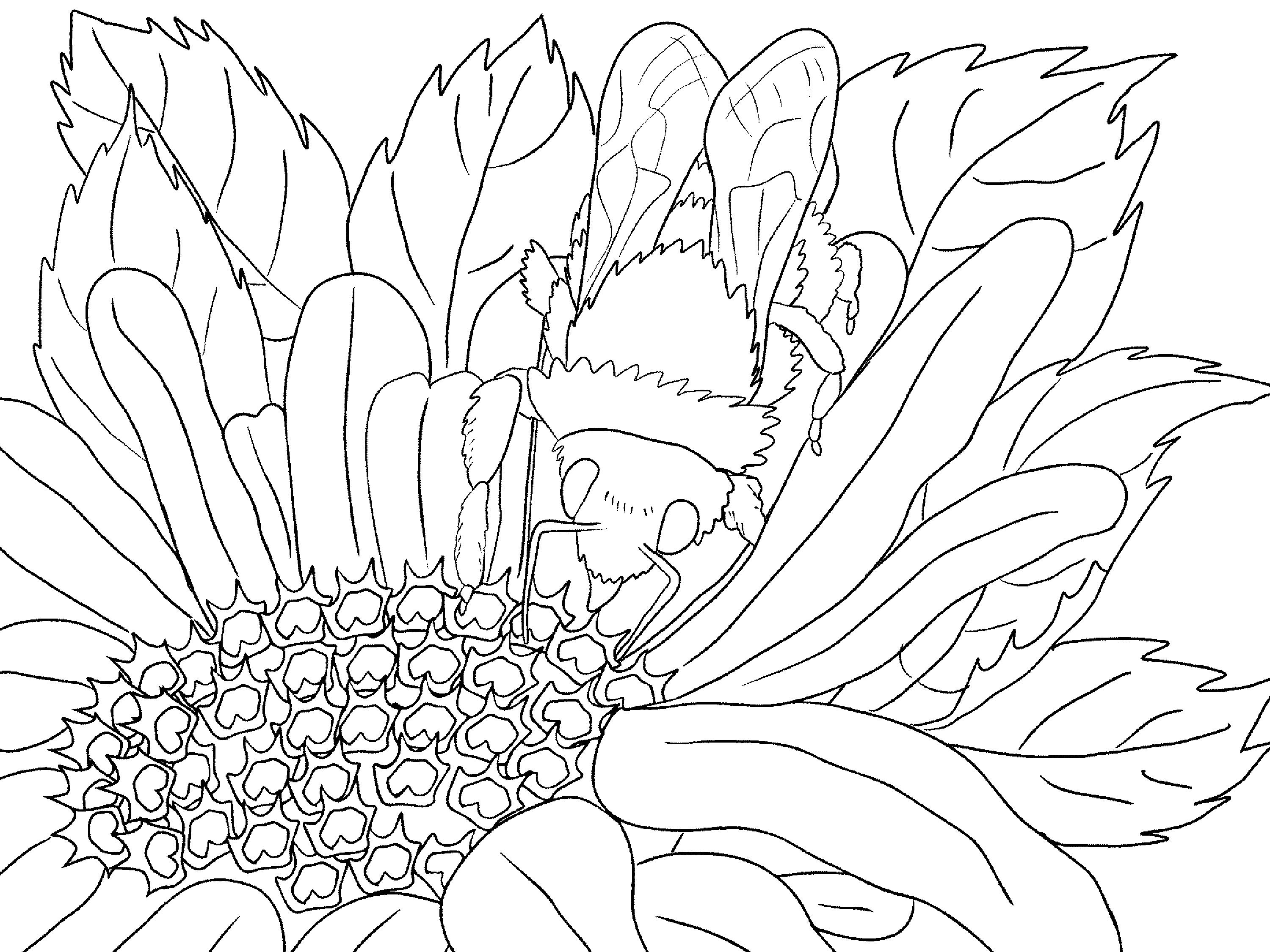 21 Scenery Coloring Pages Compilation | FREE COLORING PAGES