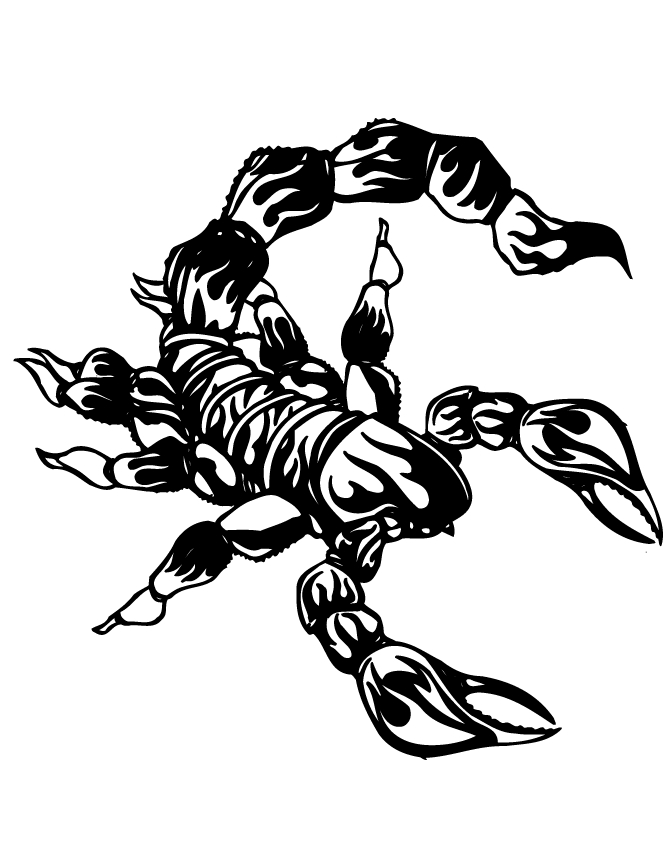scorpion coloring pages - r=scorpion pictures