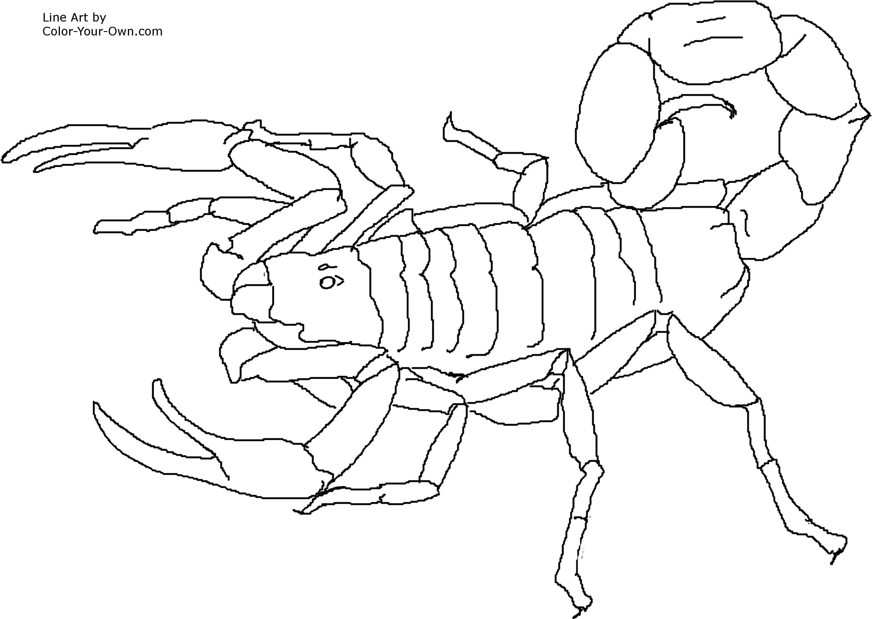 scorpion coloring pages - invertebrate scorpion side