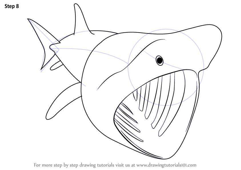 sea animals coloring pages - how to draw a basking shark