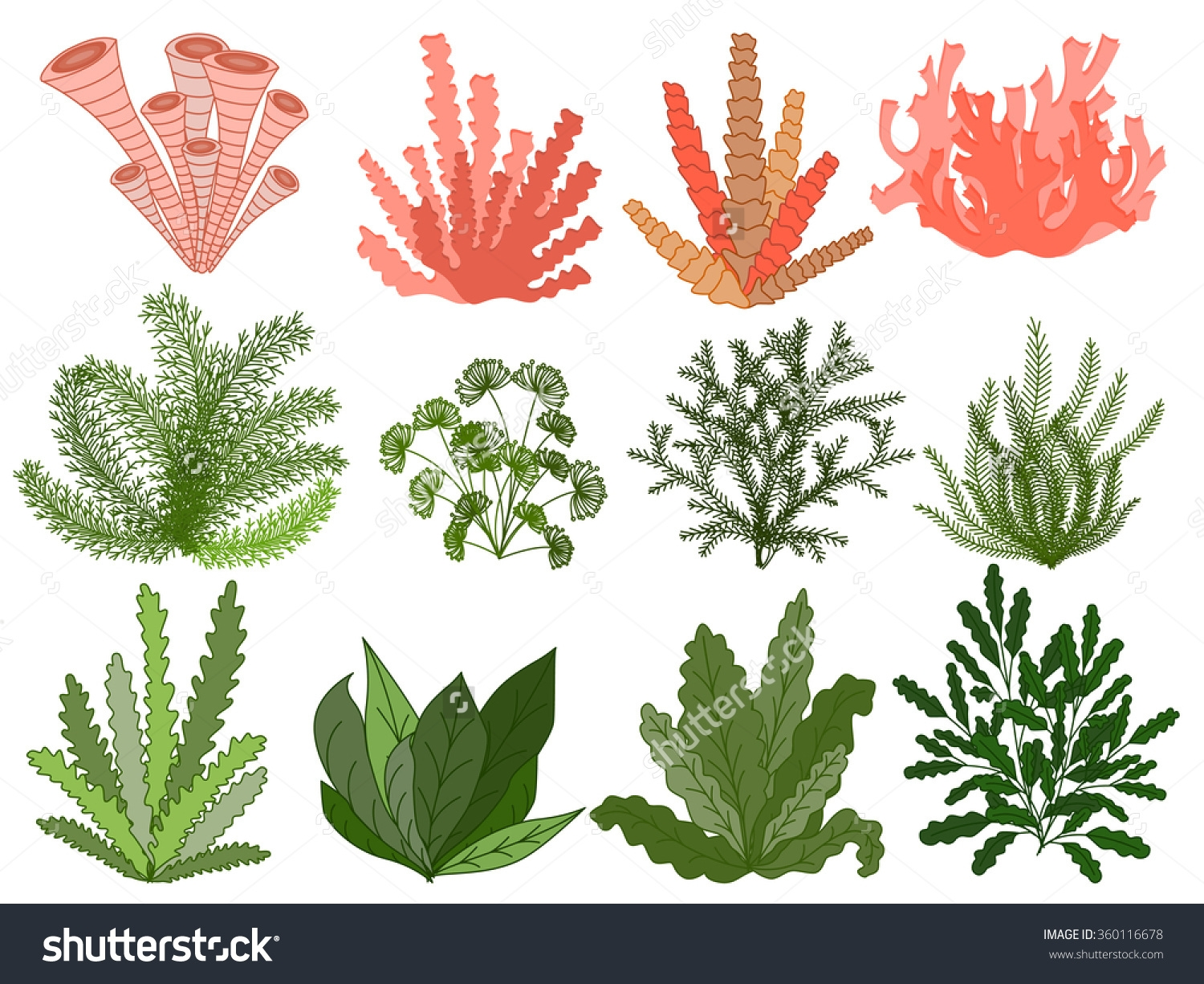 sea life coloring pages - underwater ocean plants clipart