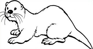 sea otter coloring page - black and white sea otter pictures