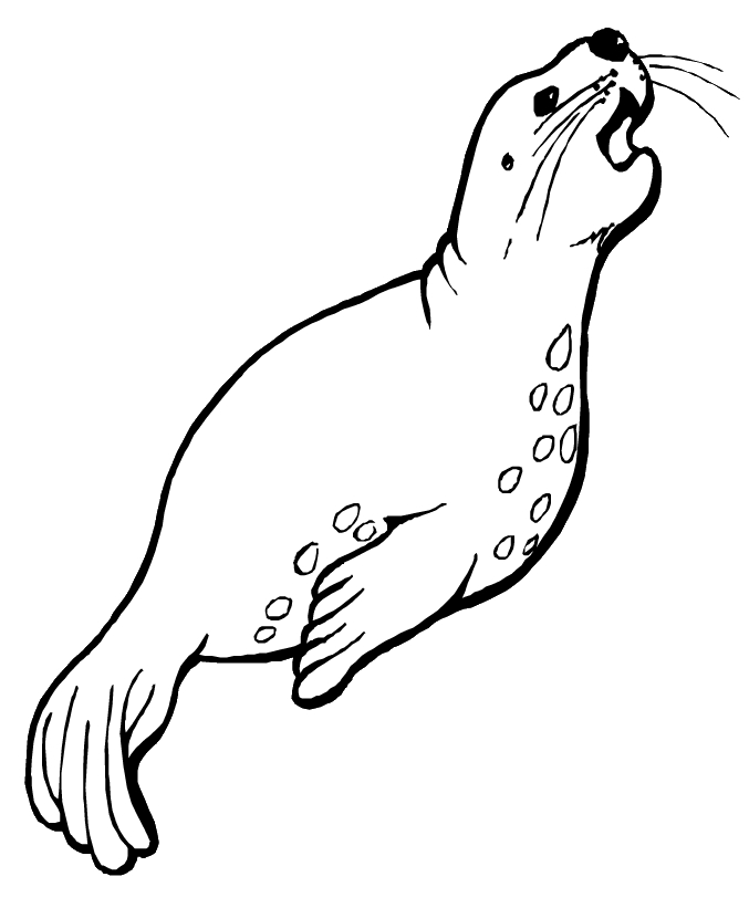 sea otter coloring page - lion coloring pages