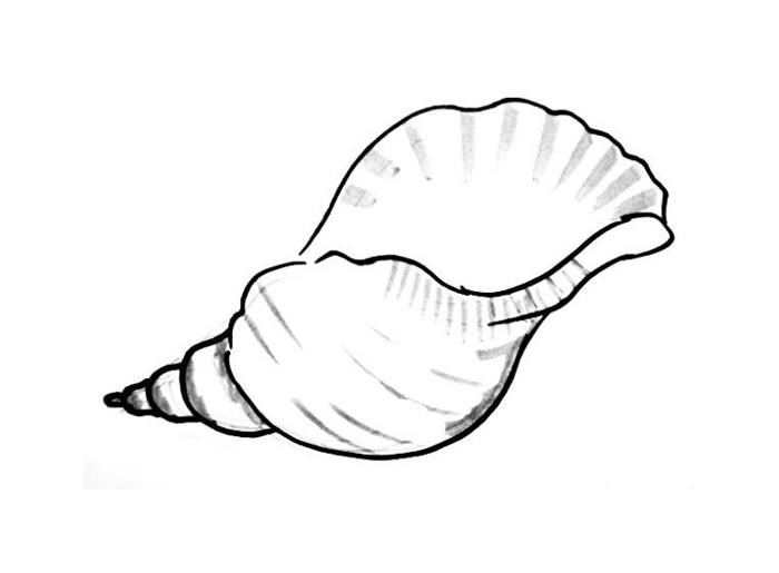 seashell coloring page - sea shell drawings