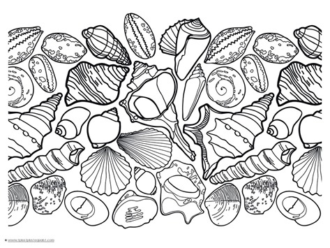 seashell coloring page - seashell coloring pages