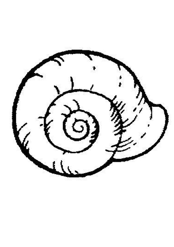 seaweed coloring pages - coquille d escargot