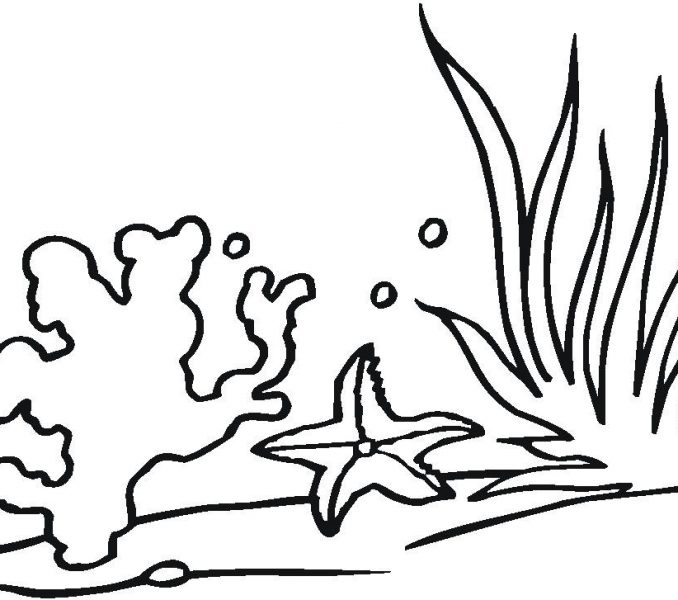 seaweed coloring pages - seaweed pictures to color