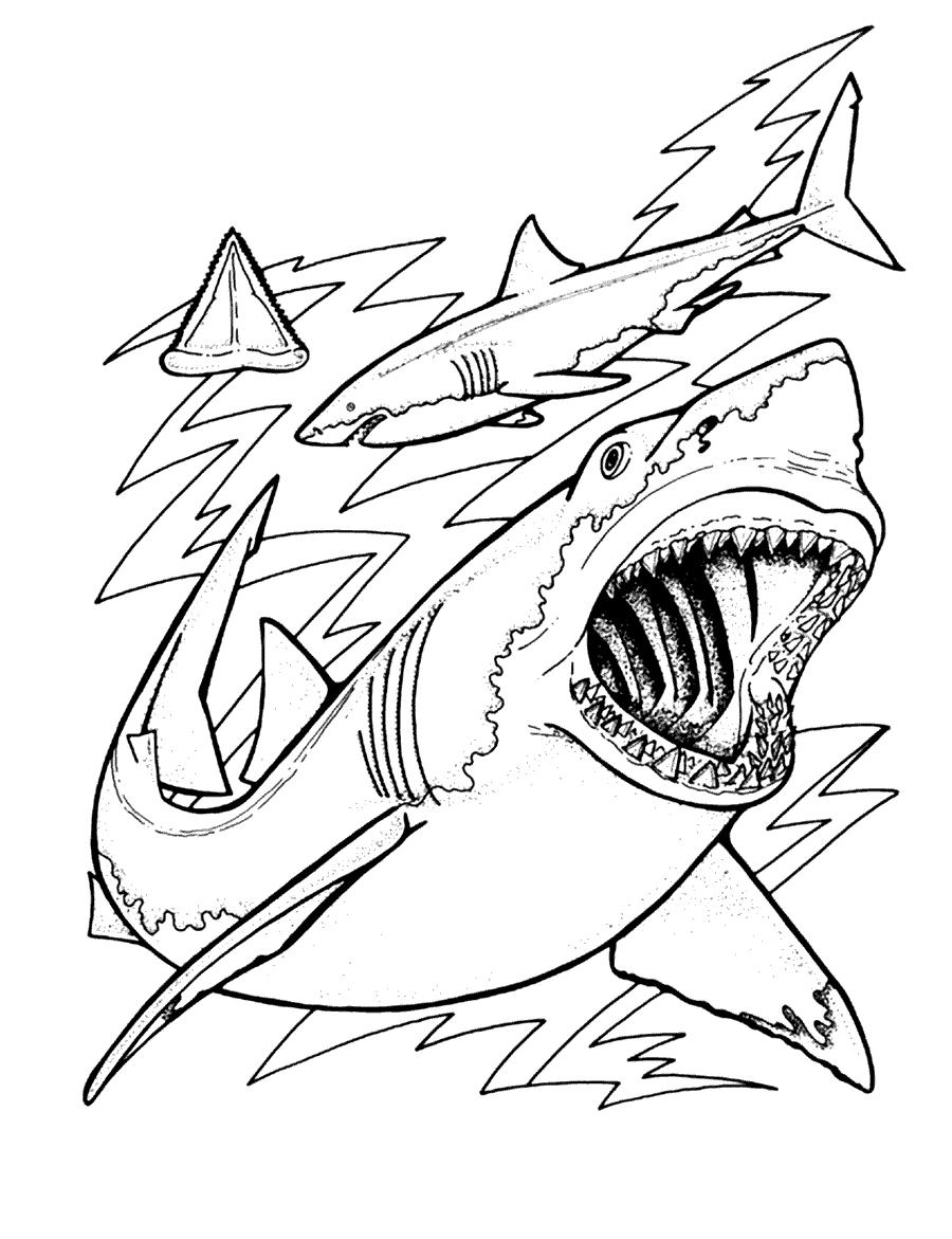 Shark Coloring Pages - Free Printable Shark Coloring Pages for Kids