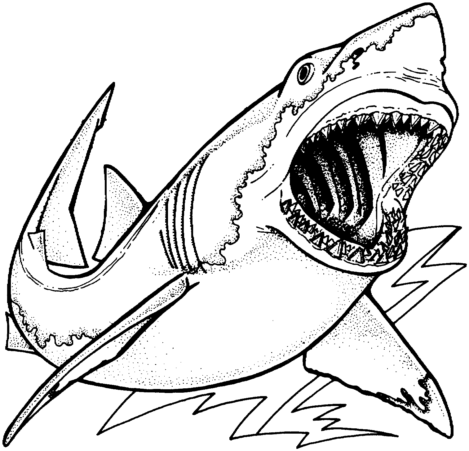 shark coloring pages - shark coloring pages