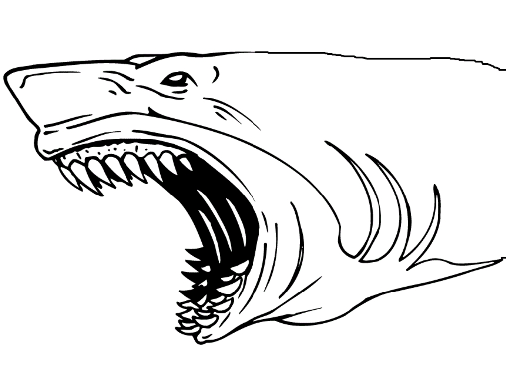 shark coloring pages - shark jaws coloring page