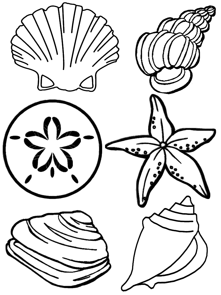 shell coloring pages - seashell coloring pages