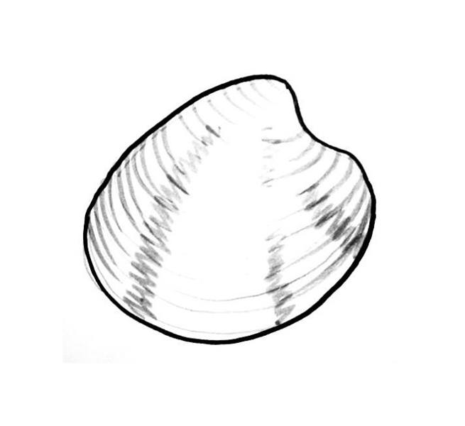 shell coloring pages - sea shells coloring pages and templates