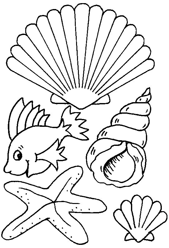 20 Shell Coloring Pages Compilation FREE COLORING PAGES