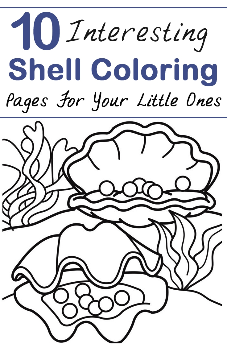shell coloring pages - interesting shell coloring pages little ones