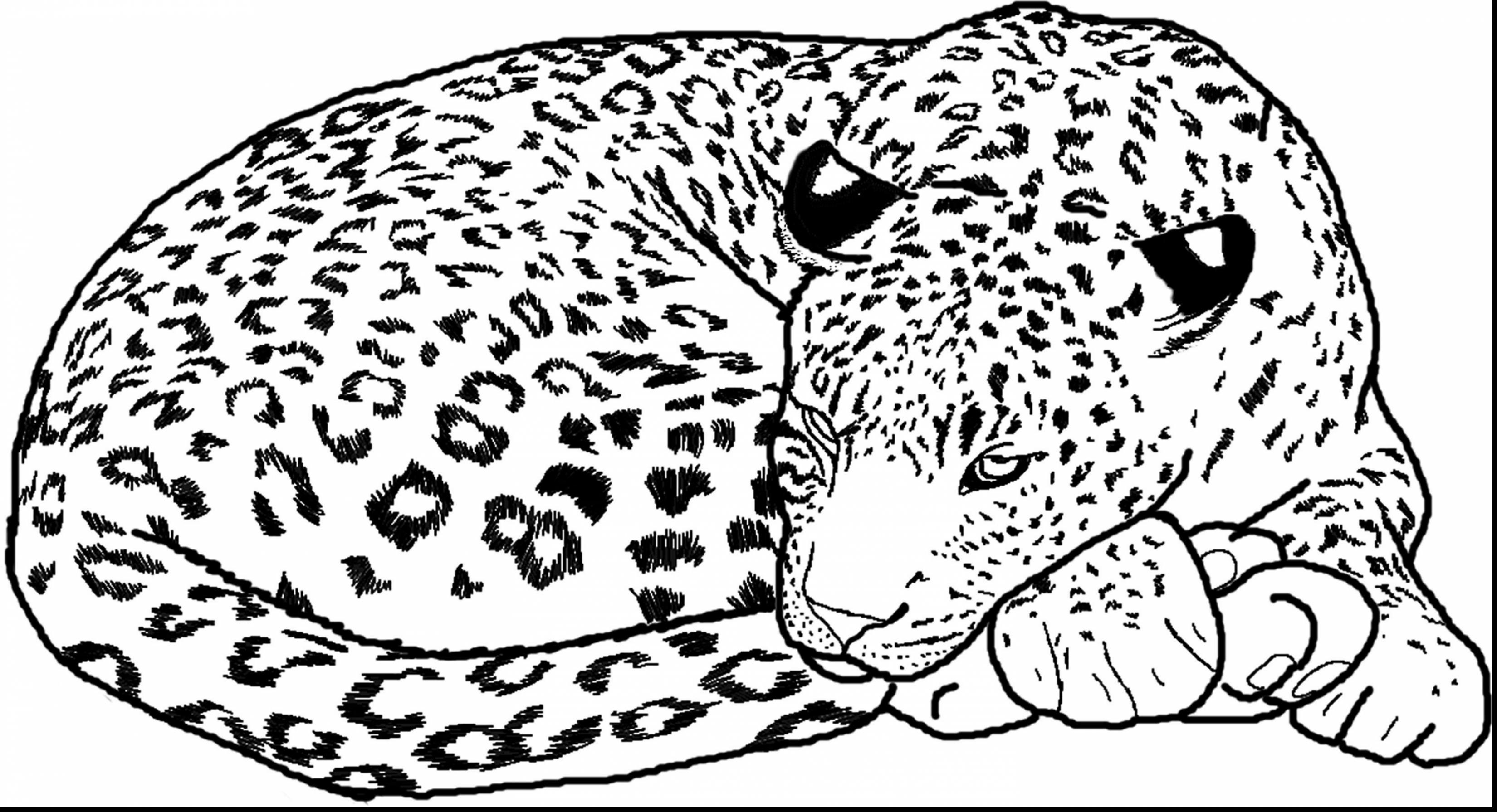 Snow Leopard Coloring Pages - Snow Leopard Coloring Pages Auromas Coloring Home