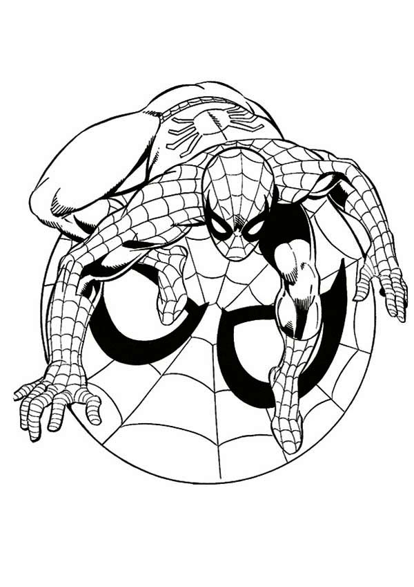 spider web coloring page - 26