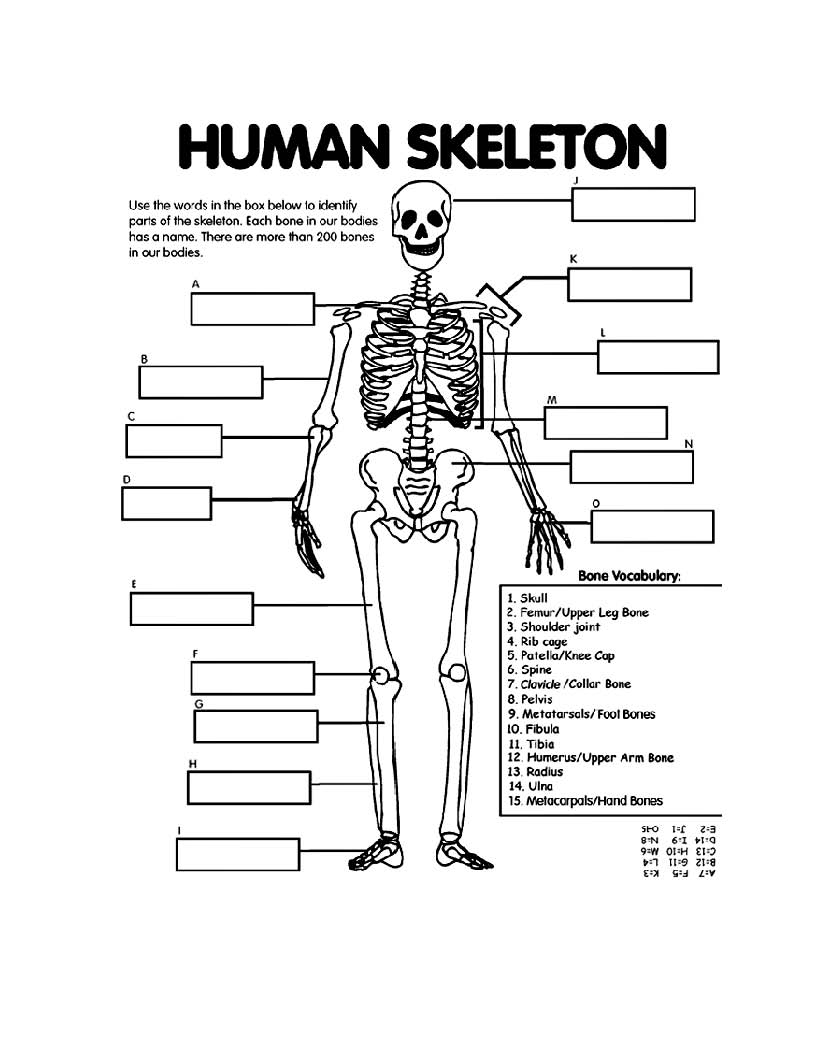 spooky coloring pages - kids skeleton drawing