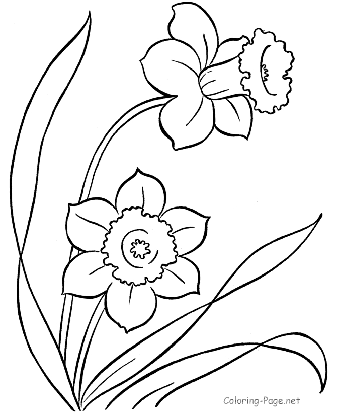 spring flowers coloring pages - edessinsfleurs