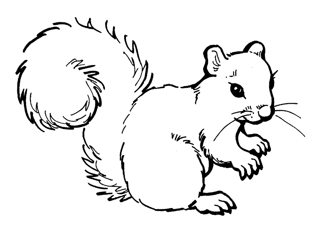 Squirrel Coloring Page - Free Printable Squirrel Coloring Pages for Kids