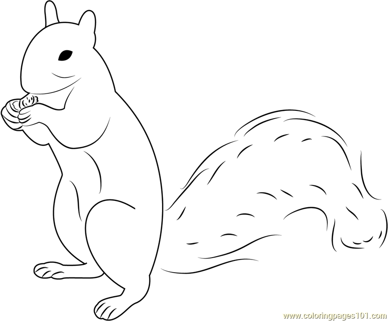 Squirrel Coloring Page - Squirrel Up Coloring Page Free Squirrel Coloring Pages