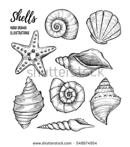 starfish coloring page - seashells