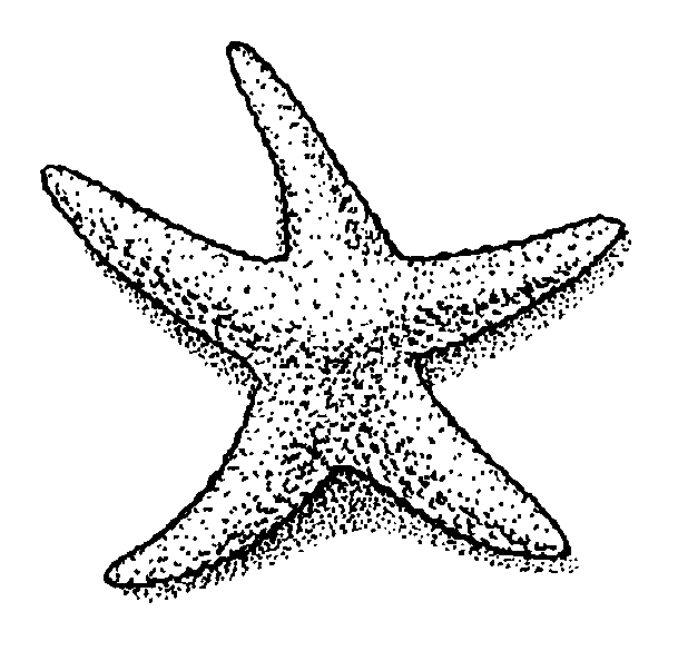 starfish coloring page - starfish outline
