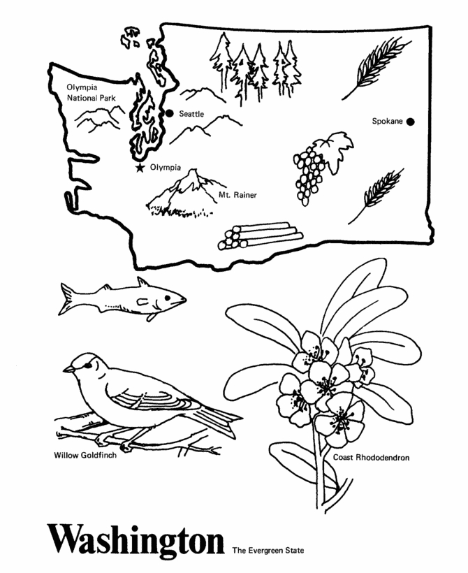 state coloring pages - q=washington state tree