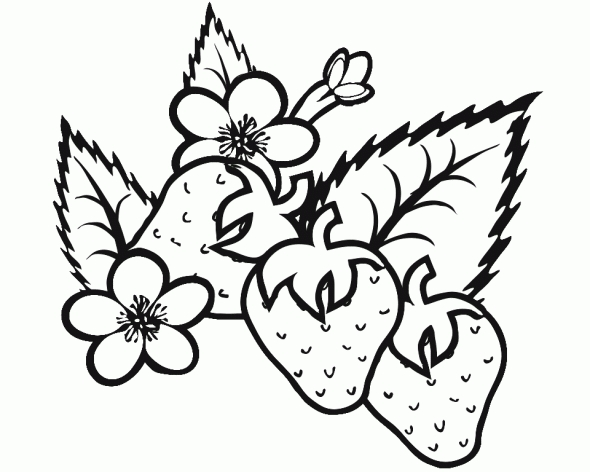 strawberry coloring page - fresh strawberry coloring pages