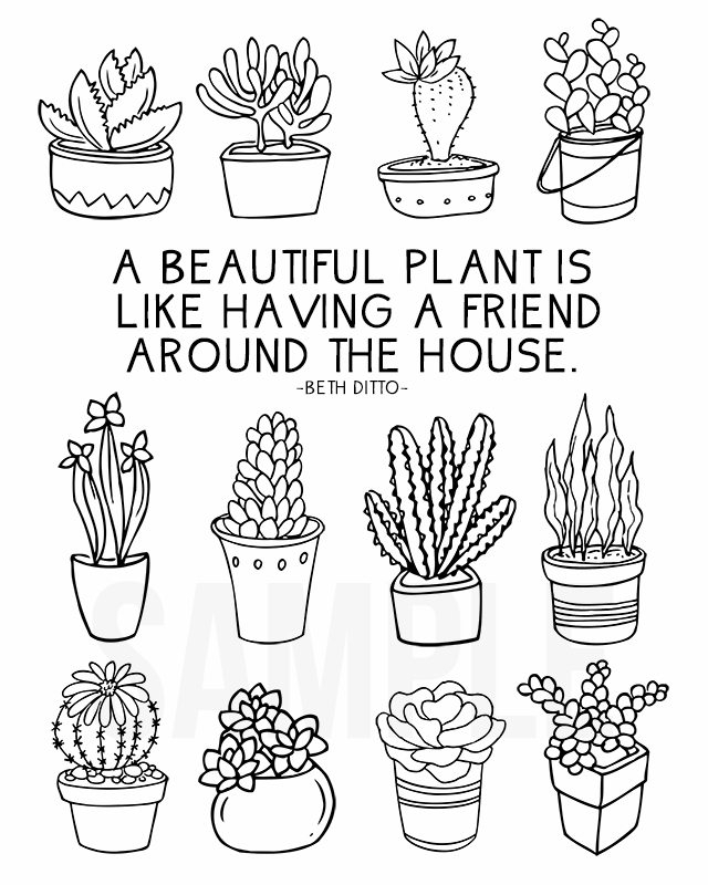 succulent coloring page - coloring sheet for plant lovers