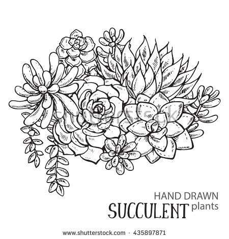 20 Succulent Coloring Page Selection FREE COLORING PAGES Part 3