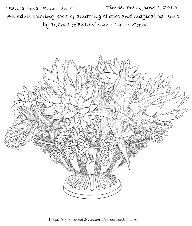 succulent coloring page - succulent coloring book photos and artwork