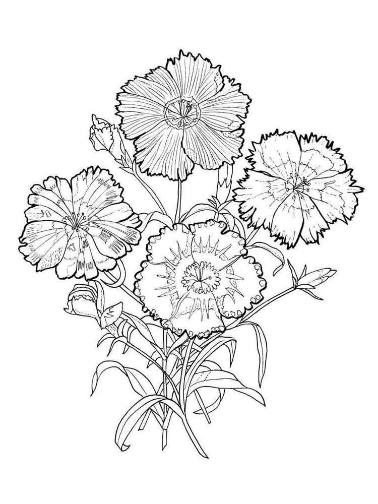 sunflower coloring page - carnation flower coloring pages