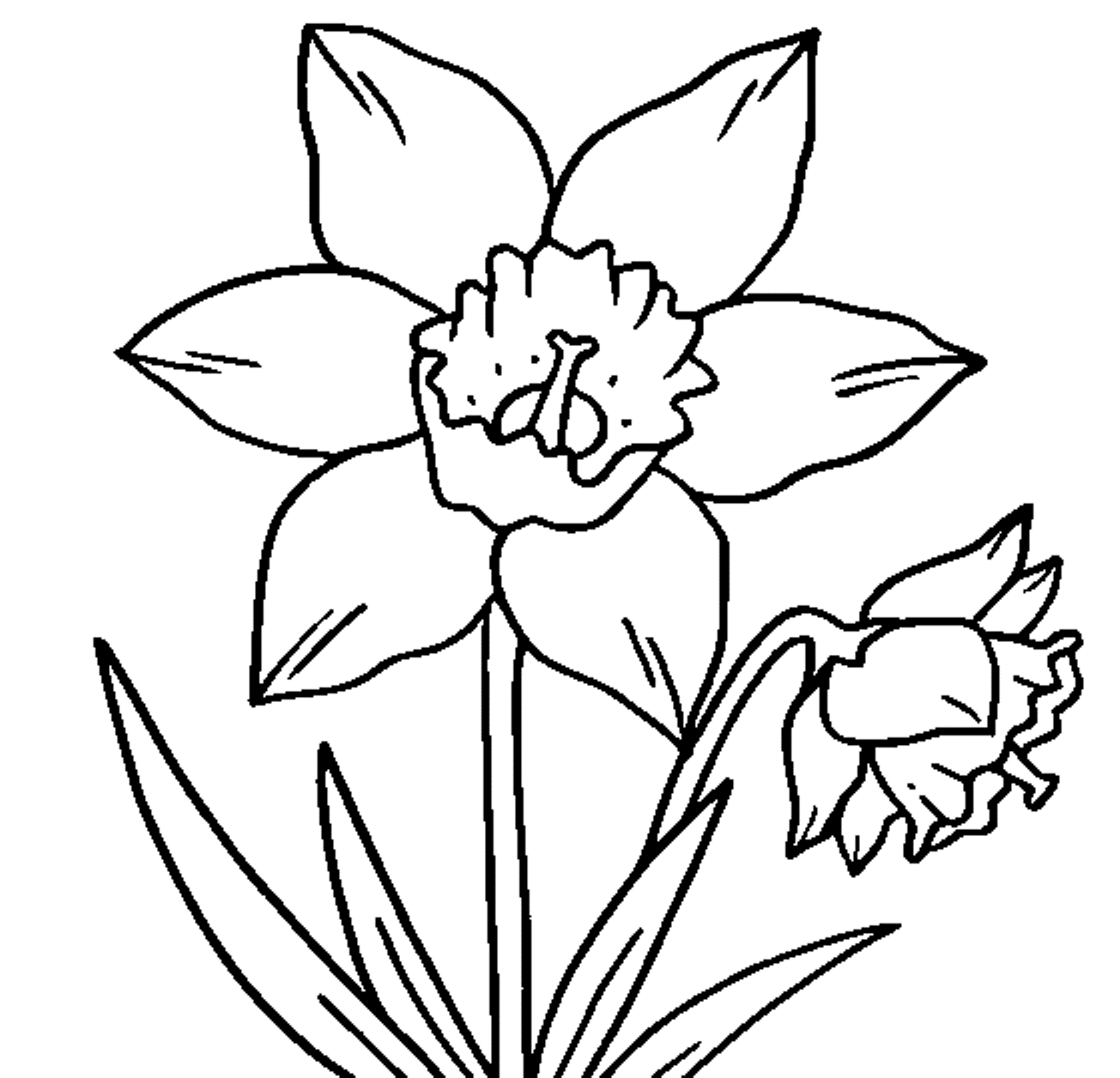 sunflower coloring page - daffodil clipart black and white images