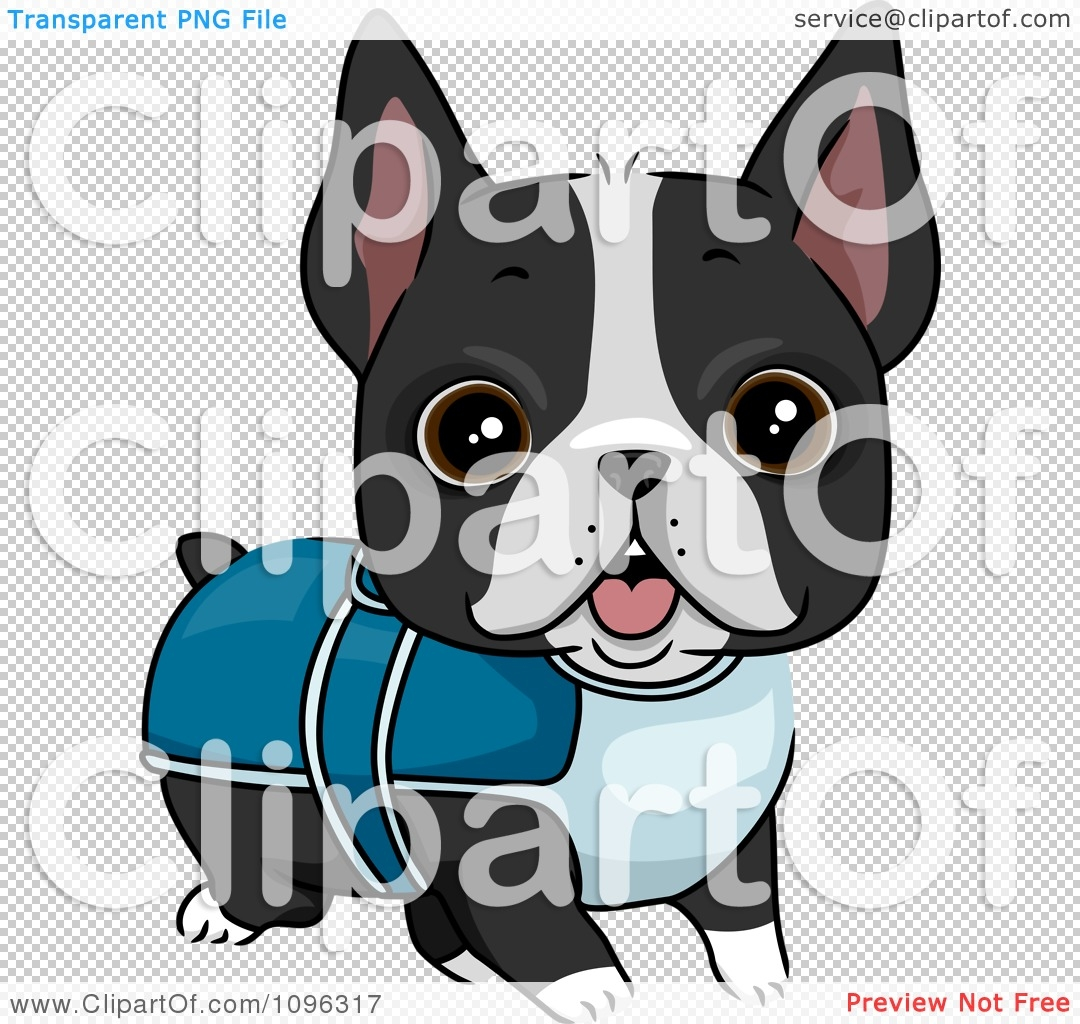 sunglasses coloring page - cute boston terrier puppy dog wearing a sweater