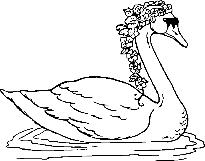 swan coloring pages - animals poultry swan coloring books to