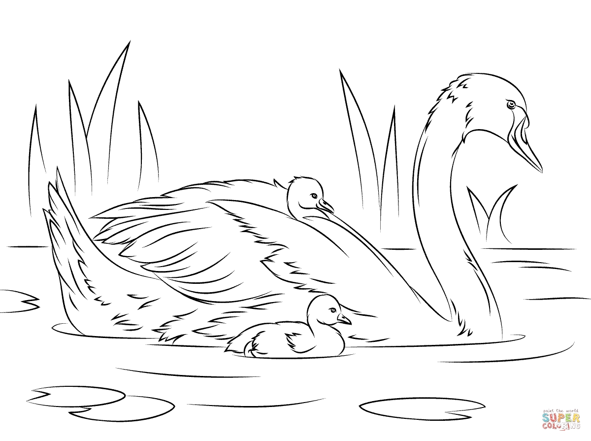 swan coloring pages - mute swan chicks