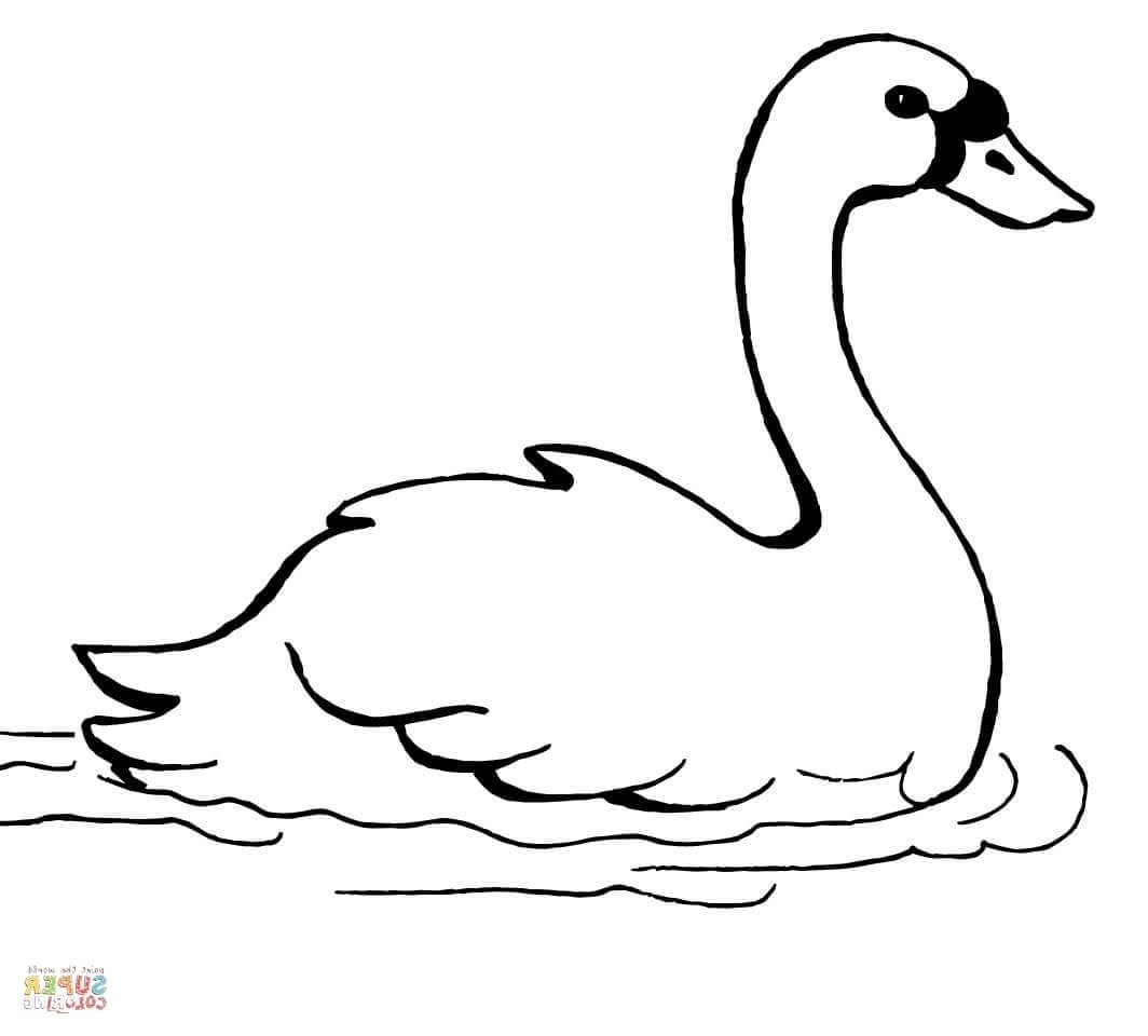 swan coloring pages - swans coloring pages swimming swan coloring page free printable coloring pages