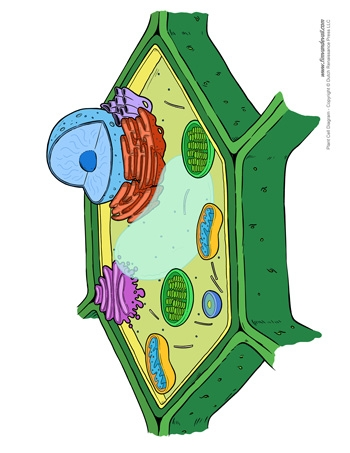 Three Little Pigs Coloring Pages - Plant Cell Diagram Unlabeled Tim S Printables