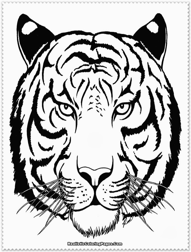 tiger coloring pages - realistic tiger coloring pages