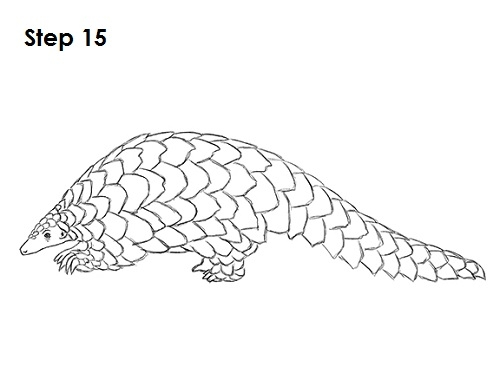toucan coloring page - 72 draw pangolin start=3