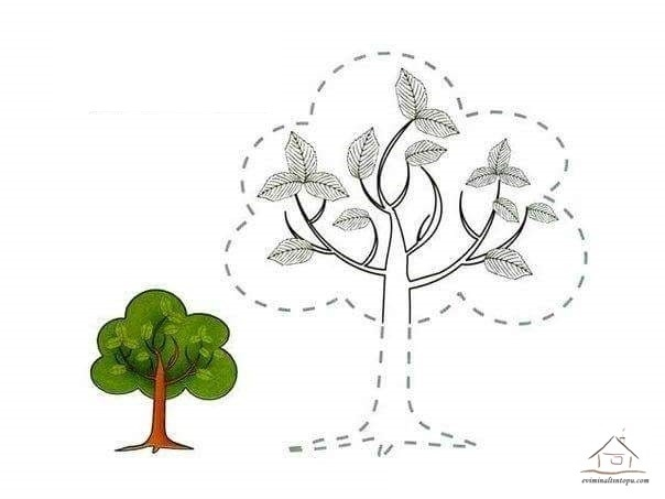 tree of life coloring pages - tracing line and coloring tree
