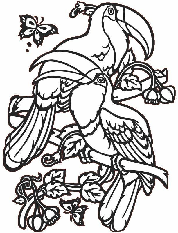 tropical coloring pages - tropical birds coloring pages